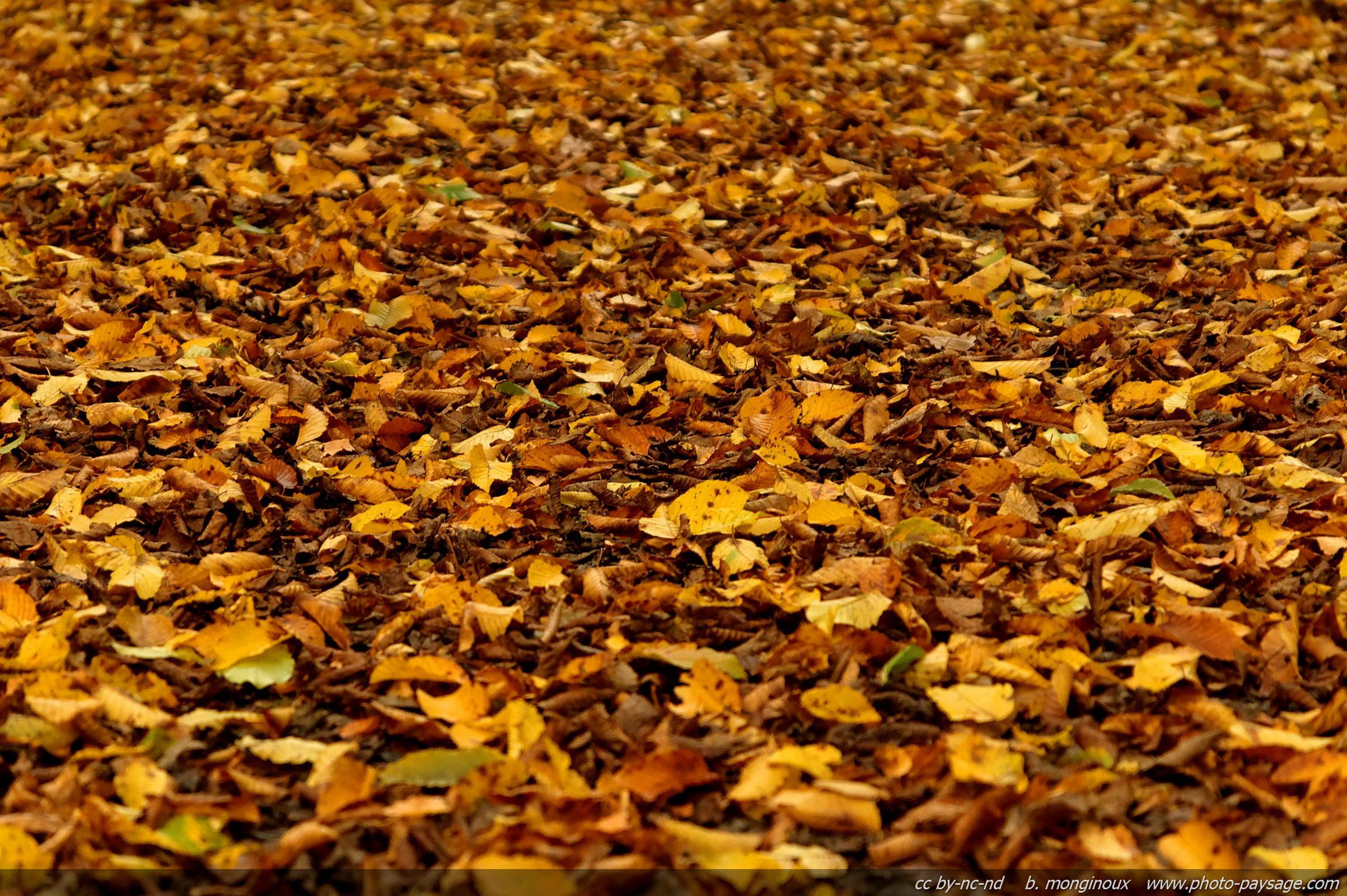 Mon cheval peut il manger les feuilles mortes ry and co for Mon amaryllis ne fait que des feuilles